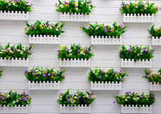 Potted plants hanging on the wall Royalty Free Stock Images