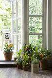 Potted Plants On Hardwood Floor. By open door in house Stock Photo