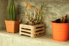 Potted plants for home decoration Modern Style Royalty Free Stock Photos