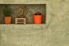 Potted plants for home decoration Modern Style Royalty Free Stock Photography