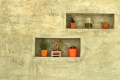 Potted plants for home decoration Modern Style. Potted plants for home design decoration Modern Style Stock Images