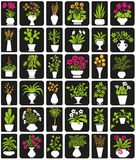 Potted plants Stock Image
