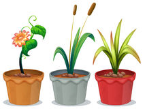 Potted Plants. Illustration of three potted plants Royalty Free Stock Photo