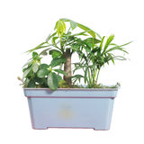 Potted Stock Images