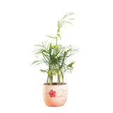 Potted Royalty Free Stock Photography