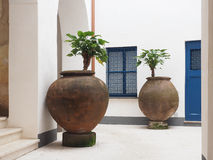 Potted Plants in an Italian Building's Court Yard Royalty Free Stock Images