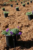 Potted plants for landscaping Stock Photo
