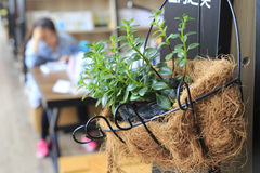 Potted plants in the library Royalty Free Stock Photography