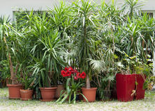 Potted plants. Lots of potted plants in sunny ambiance Royalty Free Stock Images