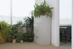 Potted Plants By Office Window Royalty Free Stock Image