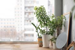 Free Potted Plants On Window Sill Royalty Free Stock Photography - 108024917