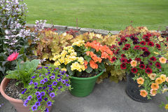 Potted plants on patio. Royalty Free Stock Image