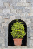 Potted plants placed in front of a cement wall. Royalty Free Stock Image