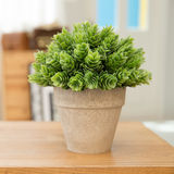 Potted plants. On wooden desk Royalty Free Stock Images