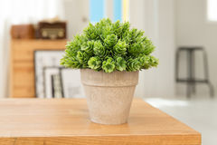 Potted plants. On wooden desk Royalty Free Stock Image