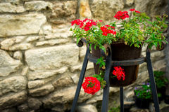 Potted plants and red flowers on the street Stock Images