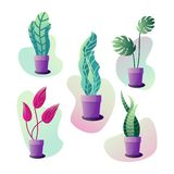 Potted plants set. Vector illustration of abstract flowers in pots in pastel colours. Set of five plants vector illustration