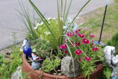 Potted plants side angle royalty free stock image