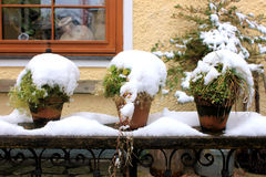 Potted plants with snow. Three potted plants with snow Stock Image