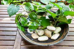 Potted plants with stagnant water potentially become mosquito br Stock Photos