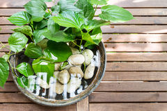 Potted plants with stagnant water potentially become mosquito br Stock Image