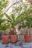 Potted Plants in the Street of Rethymno Stock Photos