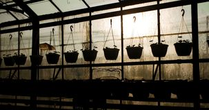 Potted plants on table in greenhouse. Panning shot of potted plants on table at nursery in greenhouse stock video