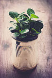 A potted plants in tin cans Stock Photography