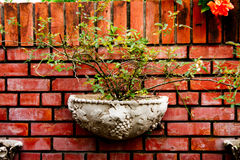 Potted plants on the wall. Old potted trees. Bright colors on the walls Stock Photos