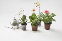 Potted Plants And Watering Can Stock Photo