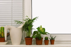 Potted plants on the windowsill Royalty Free Stock Photos
