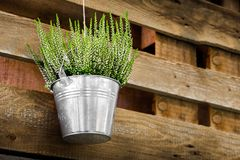 Potted plants wooden background heather metal bucket hanging flowerpot flower shop design.  Stock Images