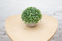 Potted plants. On wooden desk Stock Photo