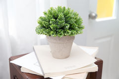 Potted plants. On wooden desk Royalty Free Stock Photos