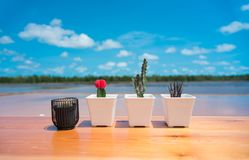 Potted plants on wooden floors royalty free stock photo