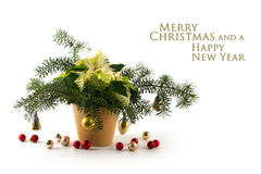 Potted poinsettia Euphorbia pulcherrima with white bracts, dec. Orated with fir branches and baubles, isolated on a white background, sample text Merry Christmas Stock Photography