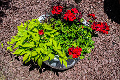 Potted Red Flowers and Landscaping Aerial View Royalty Free Stock Images