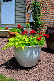 Potted Red Flowers and Landscaping Stock Photo