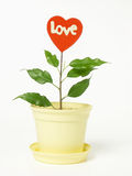Potted red heart Royalty Free Stock Photo