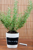 Potted rosemary herb with label Stock Images