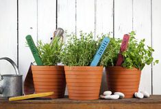 Potted rosemary, thyme and oregano Stock Image