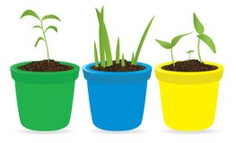 Potted seedling Royalty Free Stock Photos