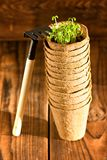 Potted seedlings growing in biodegradable peat moss pot Stock Photo