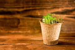 Potted seedlings growing in biodegradable peat moss pot. S on wooden background Stock Image