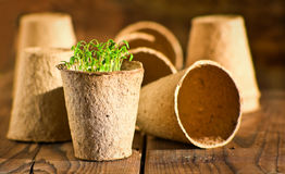 Potted seedlings growing in biodegradable peat moss pots Stock Photo