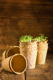 Potted seedlings growing in biodegradable peat moss pots. On wooden background Stock Photography