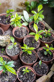 Potted seedlings growing royalty free stock photos