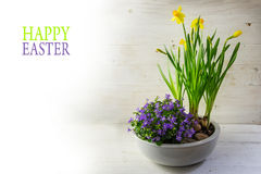 Potted spring flowers, daffodils and bluebells in a ceramic bowl Royalty Free Stock Images
