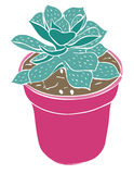 Potted Succulent. A potted succulent plant in teal and hot pink Stock Photos