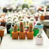 Potted succulent plants Stock Photos